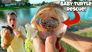 RESCUING Baby Turtle From BIG BASS!