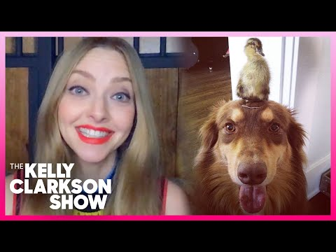 Amanda Seyfried's Dog Is BFFs With A Baby Duck