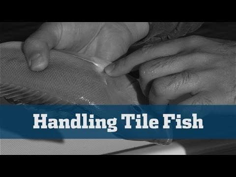 Deep Drop Tilefish Safe Handling - Florida Sport Fishing TV
