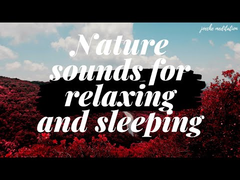 Relaxing Music with Water Sounds: Sleep Music, Nature Sounds, Peaceful River, Calm Meditation Music