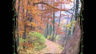 Folk Music - Linnalapsi - Sininen Taivas
