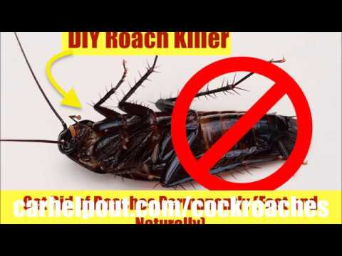 how to get rid of roaches instant fast in your car best way to remove cockroach killer bait. Black Bedroom Furniture Sets. Home Design Ideas