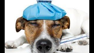 Экстрасенс, Парапсихолог, Медиум, Елена Парецкая: Болезни людей и домашних животных.