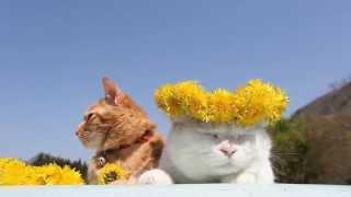 かご猫Blog http://kagonekoshiro.blog86.fc2.com/blog-entry-8507.html.