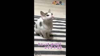 """수동 장난감만 고집하는 고양이..""""집사 손맛이 최고다냥…"""