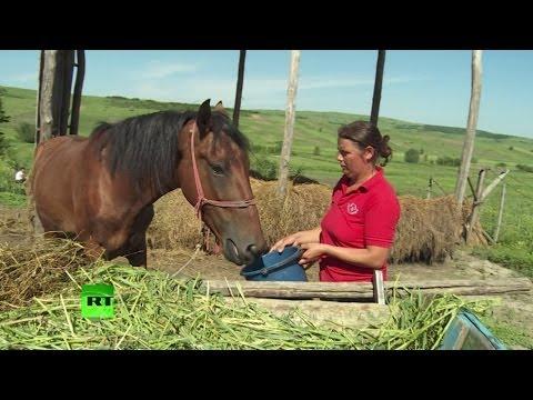 Упадок отрасли: сельское хозяйство Румынии переживает не лучшие времена