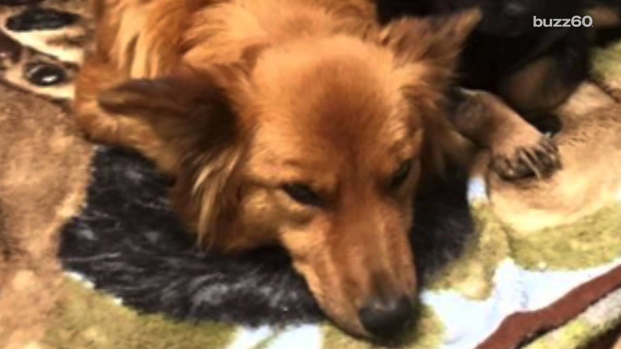 Puppy Love Caught On Camera Dog Sneaks Out To Comfort Crying