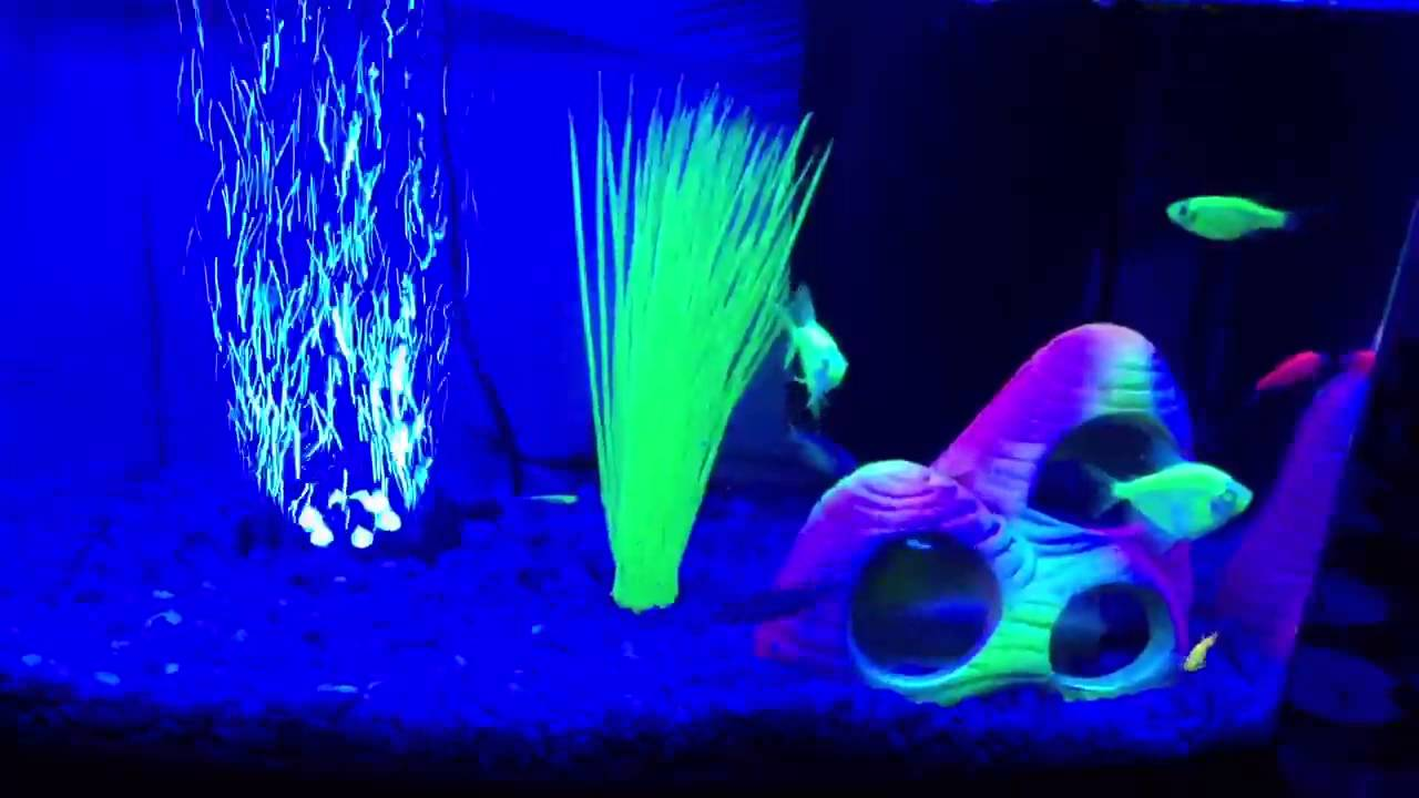 my 3 gallon glofish