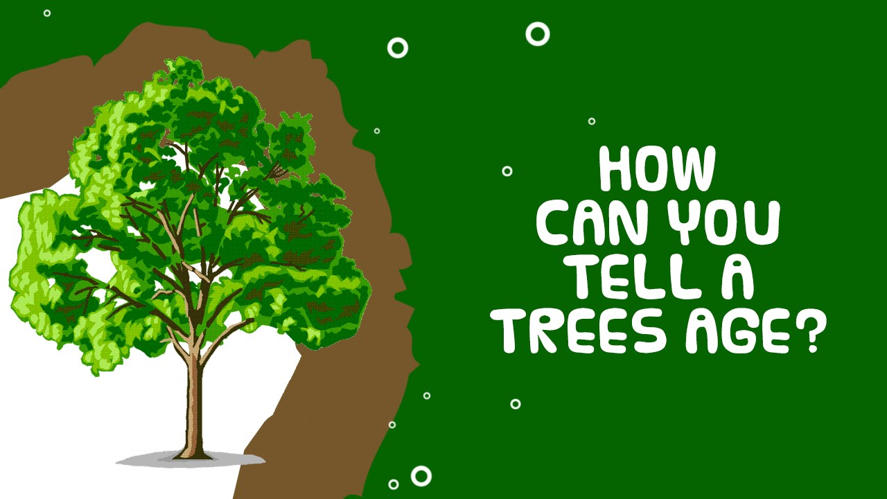 Interesting Facts About Plant Trees Age How Can You Tell Their