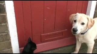Cracy Puppy & Cat