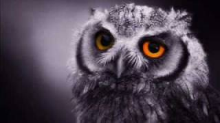 Watch Little River Band The Night Owls video