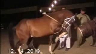 Nisar Stud Farm, Mela Ghora Dance Korotana, Gujranwala, Horse Dancing in Pakistan,