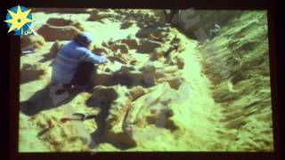 بالفيديو: وزارة البيئة تعرض فيلم تسجيلى عن حيتان محمية وادى الريان