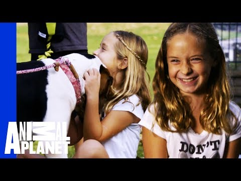 Tia Finds The Perfect Best Friend For A Little Girl In Need | Pit Bulls & Parolees