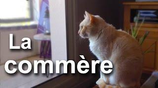 LA COMMÈRE (ATTENTION GROS MOTS) - PAROLE DE CHAT