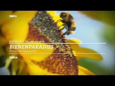 """Der Südwesten wird zum Bienenparadies / Programmaktion """"Bienenparadies - Blühender Südwesten"""" / ab 18. April 2016 in """"Kaffee oder Tee"""" im SWR Fernsehen"""
