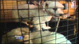 "Nearly 60 Animals Rescued From ""inhumane"" Co"