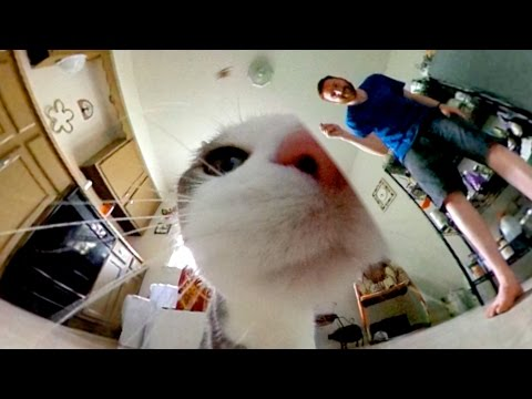 360-degree video: Johnny the cat Mp3