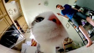 360-degree video: Johnny the cat