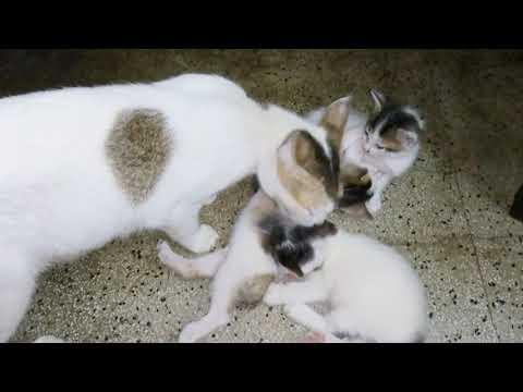 Kitten/Cat - Baby Kitten Episode 4.
