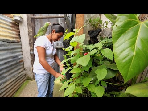 Not Enough Room For An Organic Garden? Think Again. See How Families In Guatemala Are Doing It.