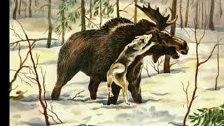 Охота на лося с лайками видео