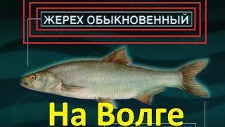 Диалоги о рыбалке -10- Ловля Жереха на Ахтубе, а также сома, судака на Ладоге.