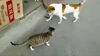Angry Cats VS Dogs Funny Compilation !!