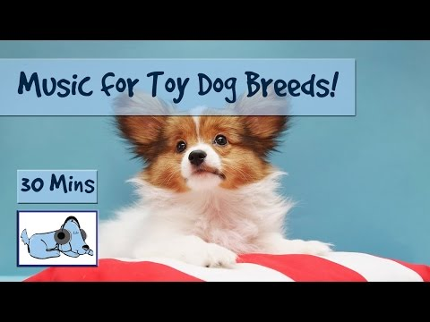Dog Music for Toy Sized Breeds! Perfect Music for any Small Dog or Puppy!