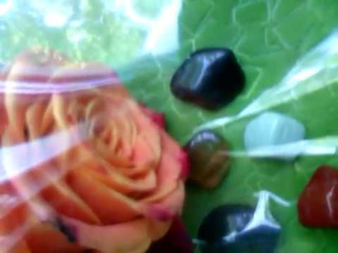 розы для скорпиона  цикл цвета роз для каждого знака зодиака