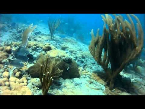 South Florida Coral Reef Freediving  Mix