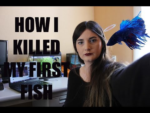 Betta Fish: How to Treat Fin Rot with Water Changes & Methylene Blue Baths