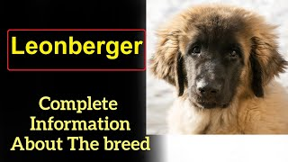 Leonberger. Pros and Cons, Price, How to choose, Facts, Care, History