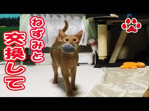 Smart cat Luca's cute idea for the trade.[Cats room Miaou]-turn on English subtitle