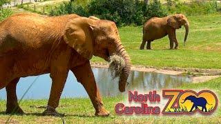 Поход в зоопарк штата Северная Каролина - часть 1, Африка(Поход в зоопарк штата Северная Каролина - часть 1, Африка В этом видео Вы посетите зоопарк штата Северная..., 2016-06-04T15:42:27.000Z)