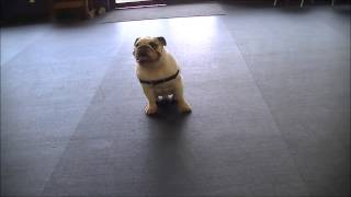 English Bulldog Doing Some Puppy Push-ups! Pittsburgh Dog Trainer