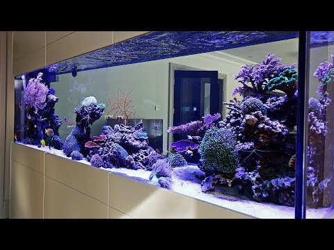Beautiful Triton Reef Aquascape - Room Divider 7 Months Old
