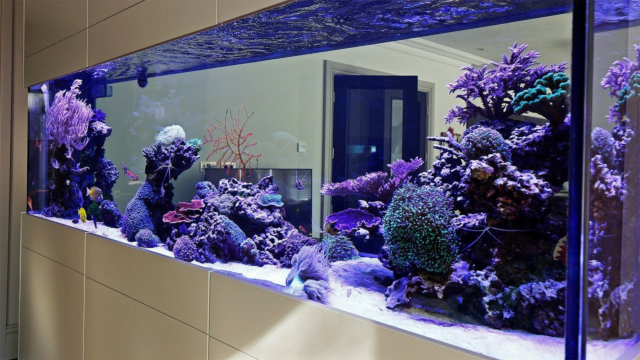 Beautiful Triton Reef Aquascape Room Divider 7 Months Old Youtube