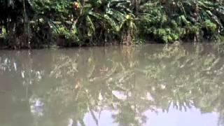 Video Buaya dilepas di sungai way krui download MP3, 3GP, MP4, WEBM, AVI, FLV April 2018