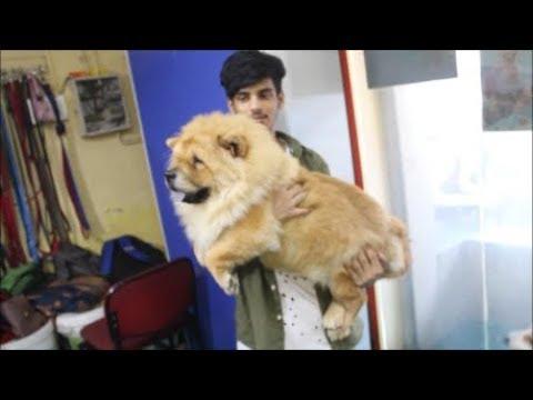 Dog Cafe In Mumbai (Vlog #3)!!