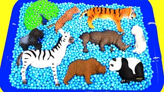 Wild Zoo Animals Toys for Kids! Learn Where Animals Live - Giraffe Rhino Gorilla Tiger