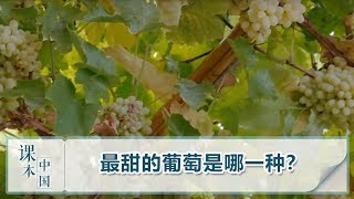 [跟着书本去旅行]最甜的葡萄是哪一种?| 课本中国