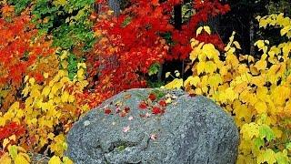 VLOG: Яркие Краски Осени