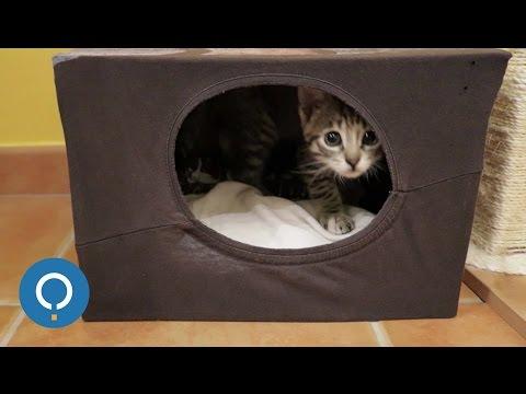Fabriquer Une Maison En Carton Pour Chat