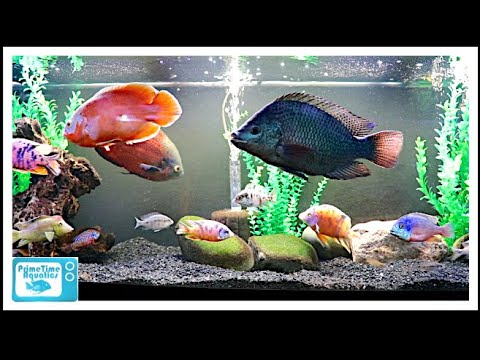 Full Fish Room Tour: Fall 2018 Part 1 - Some Great Fish!