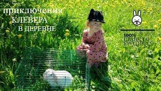 Декоративные кролики уход и содержание