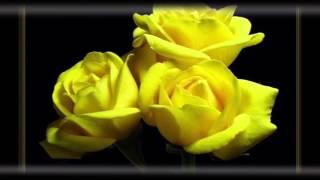 Mon Amie La Rose - Hasmik Martirosyan