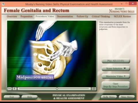 Female Genitalia and Rectum