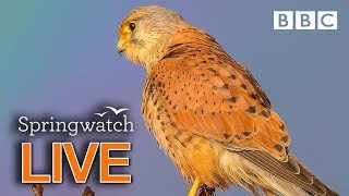 Cute wildlife cams 13 June  | BBC Springwatch