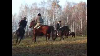 Hubertus w Leśniczówce, pogoń za lisem. Goczałkowice-Zdrój 2014